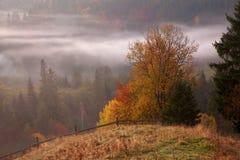 早晨薄雾在山森林地 库存图片