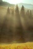 早晨薄雾在山森林地 免版税库存照片