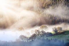 早晨薄雾森林风景 库存照片