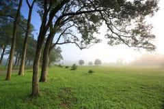 早晨薄雾,台湾 免版税库存图片