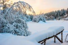 早晨被射击冬天森林 免版税图库摄影