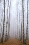 早晨路在深深地薄雾秋天桦树公园 免版税库存照片
