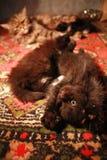 早晨运动小猫 免版税库存照片