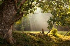 早晨阳光在森林里 库存图片