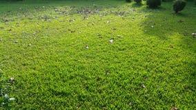 早晨阳光在草和在庭院里 免版税库存照片