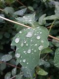 早晨雨 库存图片