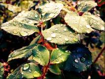 早晨雨 库存照片