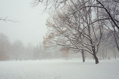 早晨雪霭在城市公园 免版税库存照片