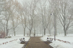 早晨雪霭在城市公园 免版税库存图片