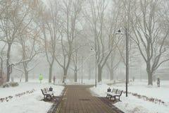 早晨雪霭在城市公园 免版税图库摄影