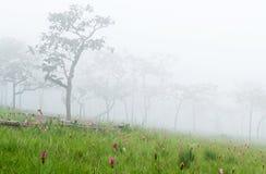 早晨雾和forest3 免版税库存照片