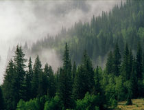 早晨雾在圣胡安国家森林,科罗拉多里 库存照片
