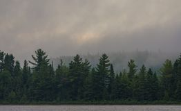 早晨雾的森林由湖 免版税库存照片