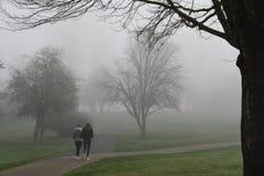 早晨雾通过树在雷德蒙德, WA公园 免版税库存图片