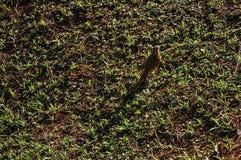 早晨霜和鸟之前盖的草坪特写镜头,在Monte阿雷格里附近做南水道 免版税图库摄影