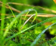 早晨露水,充满活力的绿草 免版税库存图片