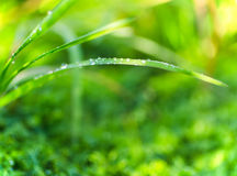 早晨露水,充满活力的绿草 库存照片