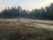 早晨领域和森林 免版税库存照片