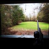 早晨鹿狩猎 免版税图库摄影