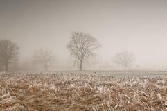 早晨,在草甸的11月霜早晨 免版税库存图片