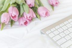 早晨 在白色坏背景的桃红色郁金香 免版税库存照片