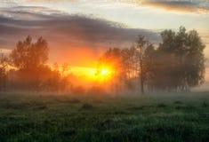 早晨 有薄雾的黎明在一个美丽如画的草甸 太阳光芒 免版税库存图片