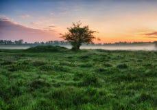 早晨 有薄雾的黎明在一个美丽如画的草甸 太阳光芒 库存图片