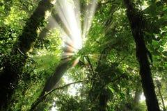 早晨轻的云彩森林 免版税库存图片
