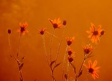 早晨 草甸花在黎明 图库摄影