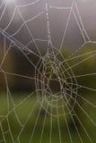 早晨spiderweb 免版税库存照片