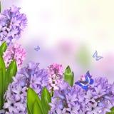 早期的与风信花的春天精美花卉背景开花  图库摄影