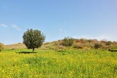 早期的以色列南部的春天 图库摄影