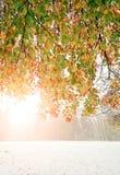 早期的冬天在秋天森林里 免版税库存照片