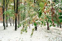 早期的冬天在秋天森林里 免版税图库摄影