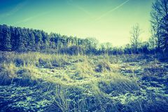 早期的冬天领域葡萄酒照片  库存图片