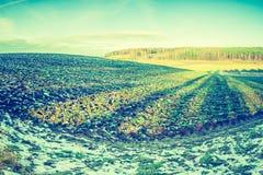 早期的冬天领域葡萄酒照片  库存照片