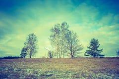 早期的冬天领域葡萄酒照片  免版税库存照片