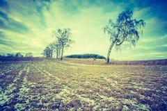 早期的冬天领域葡萄酒照片  图库摄影