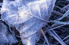 早期的冬天 在霜早晨霜下的秋叶 库存照片