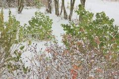 早期的冬天 免版税图库摄影