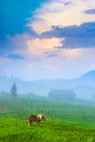 早期的喀尔巴阡山脉的早晨 库存图片