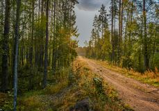 早期的在雨以后的秋天晴朗的早晨 俄罗斯,列宁格勒地区 库存照片