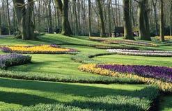 早期的庭院春天 免版税库存图片