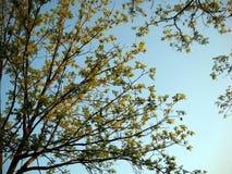 早期的春天和黄昏阳光 库存照片