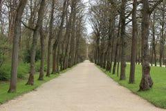 早期的春天在公园 库存图片