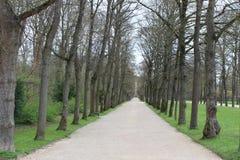 早期的春天在公园 免版税库存图片
