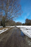 早期的春天在卡利柯治 塔林 爱沙尼亚 欧洲 库存图片