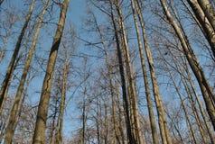 早期的春天在森林里 免版税库存照片
