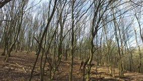 早期的春天在森林里 股票视频