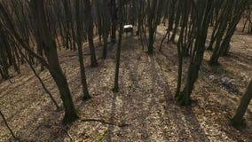 早期的春天在森林里 股票录像